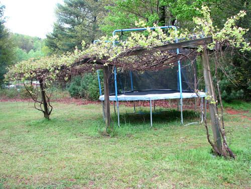 so i want to build a grape trellis