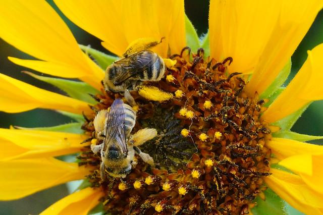 Comment prendre soin des abeilles de son jardin for Prendre soin de son enfant interieur