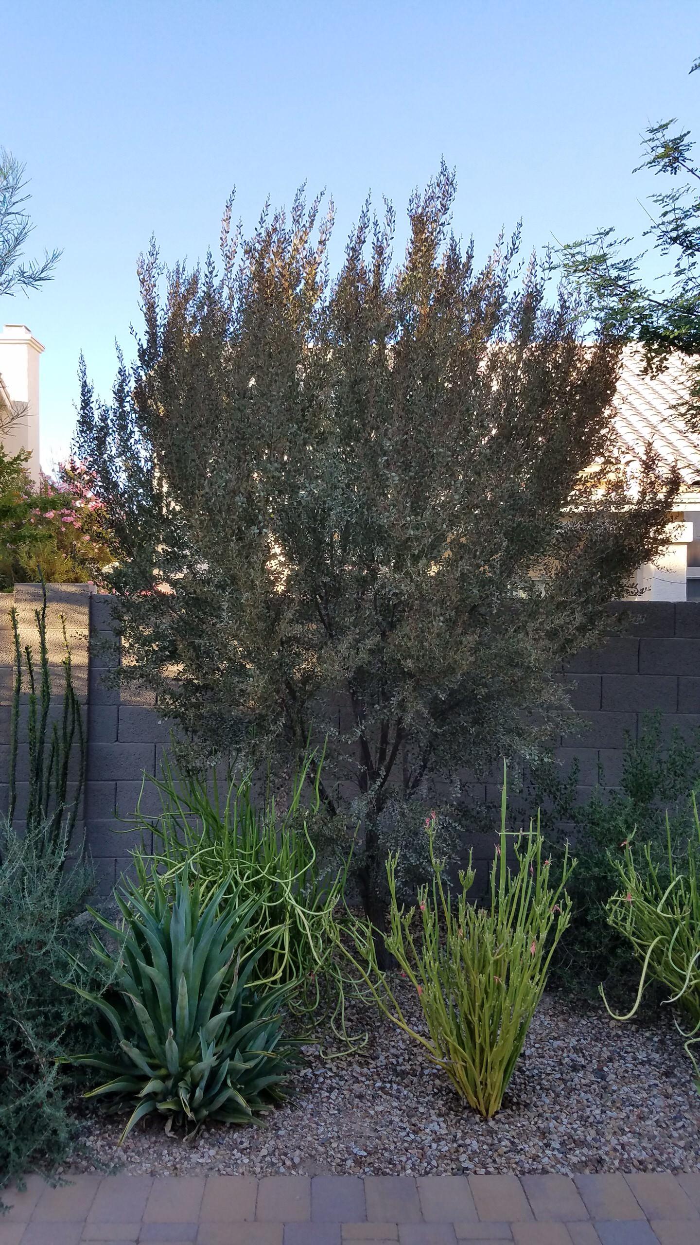 Plantings - 4 years