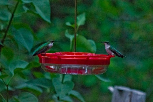 Birds And Other Mobile Features In The Garden 2015 6
