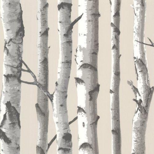 Tuxbury Beige Birch Trees Wallpaper, Sample.
