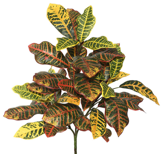 """34"""" Cronton Plant X 3 With 40 Leaves, Green/Ora"""