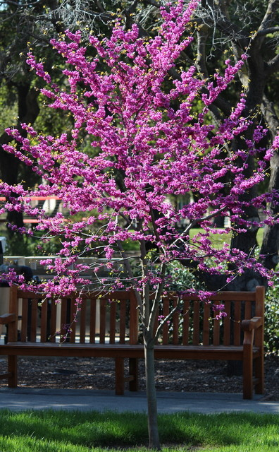 7 Spectacular And Practical Spring Flowering Trees