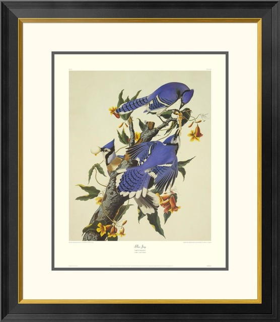 Blue Jay Artwork With Decorative Border - Traditional - Prints And ...