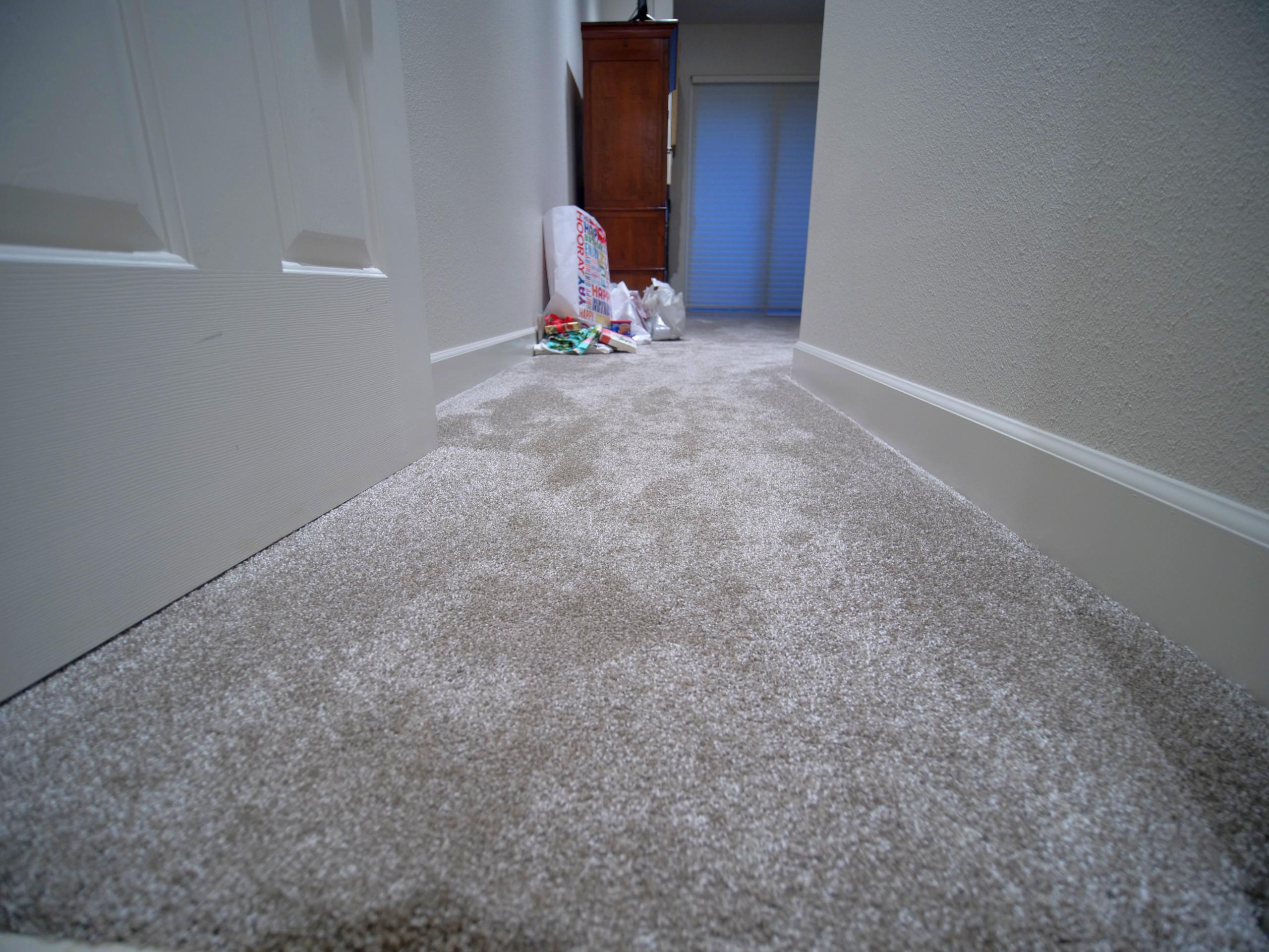 Modern Master Bedroom with Grey Carpet