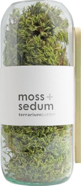 Potting Shed Creations Moss Sedum Terrarium Bottle Large