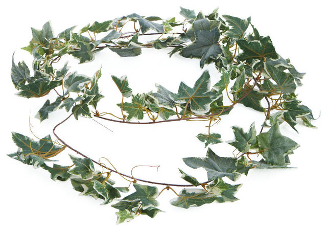 Variegated Ivy Garlands, Set Of 3.