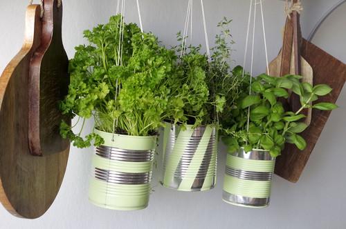 Diy Recycler Des Conserves Pour Cultiver Des Herbes Aromatiques