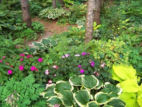 Jardín de sombra en GPC Native Plant Botanical Garden