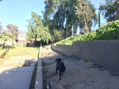 Ideas For Tiered Slope Landscape Zone 10 San Diego