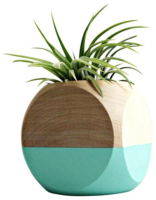 Geometric Wood Planter With Air Plant, Aqua