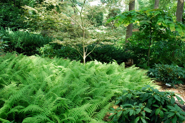 Ferns A Shade Gardener S Best Friend