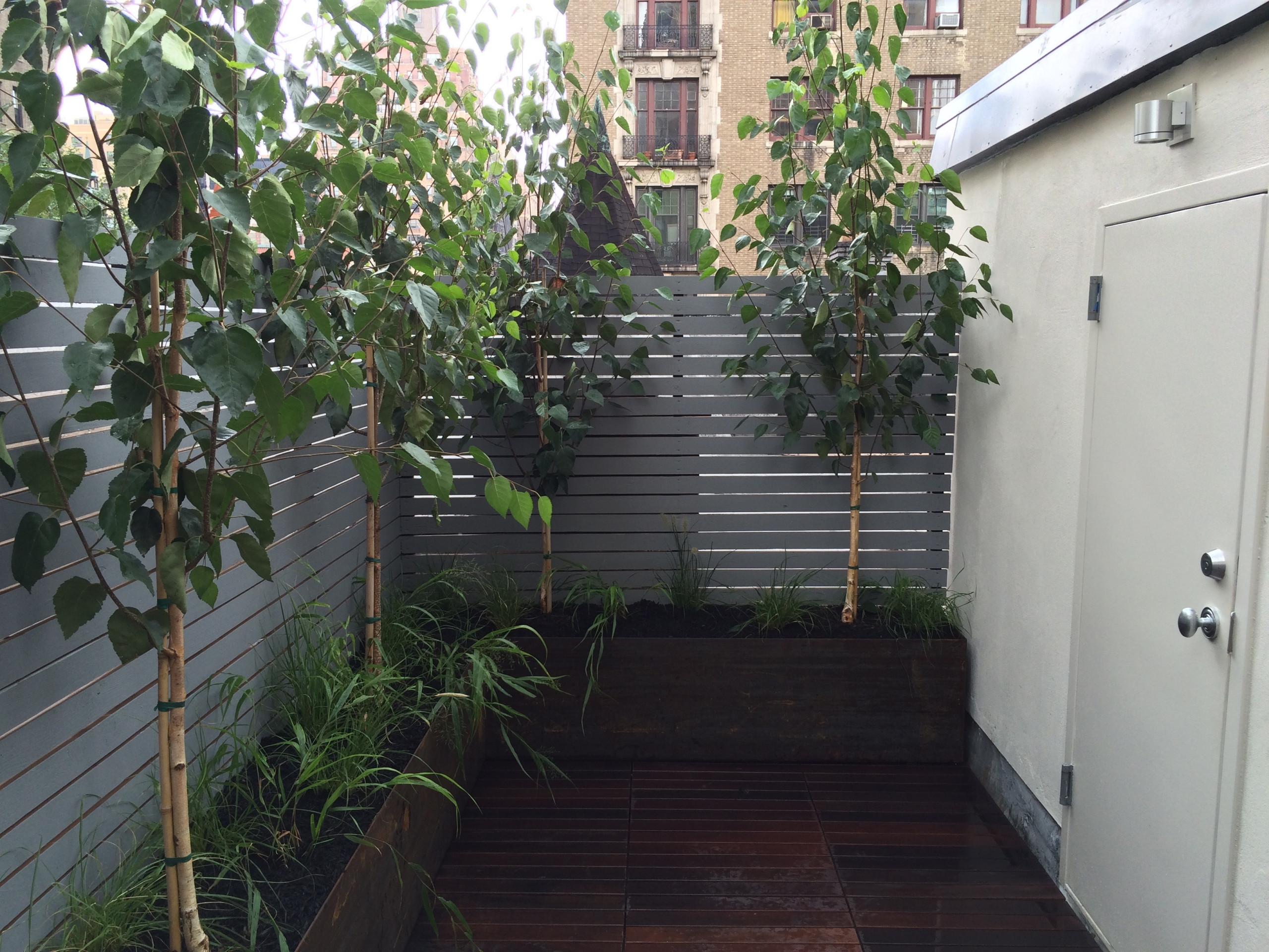 Fence #3 Cedar Plummet