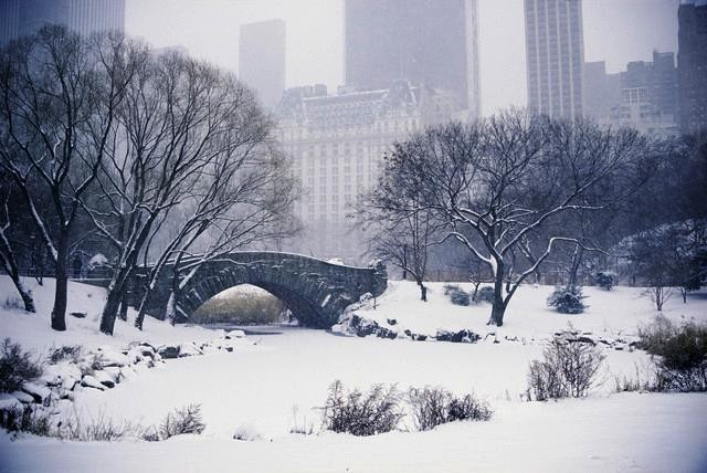 Snow over central park in new york peel and stick for Central park mural
