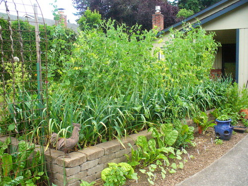 Alternatives To Pressure Treated Wood For Raised Vegetable Beds