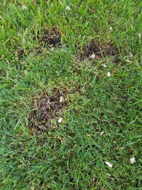 Weeds Killed Will Grass Grow
