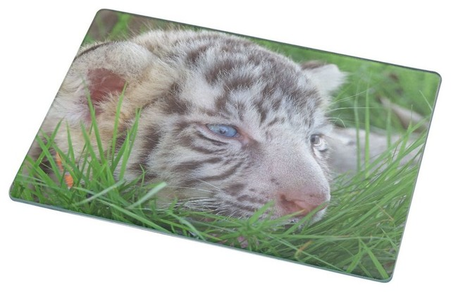 baby white tiger in grass with bright blue eyes cutting board