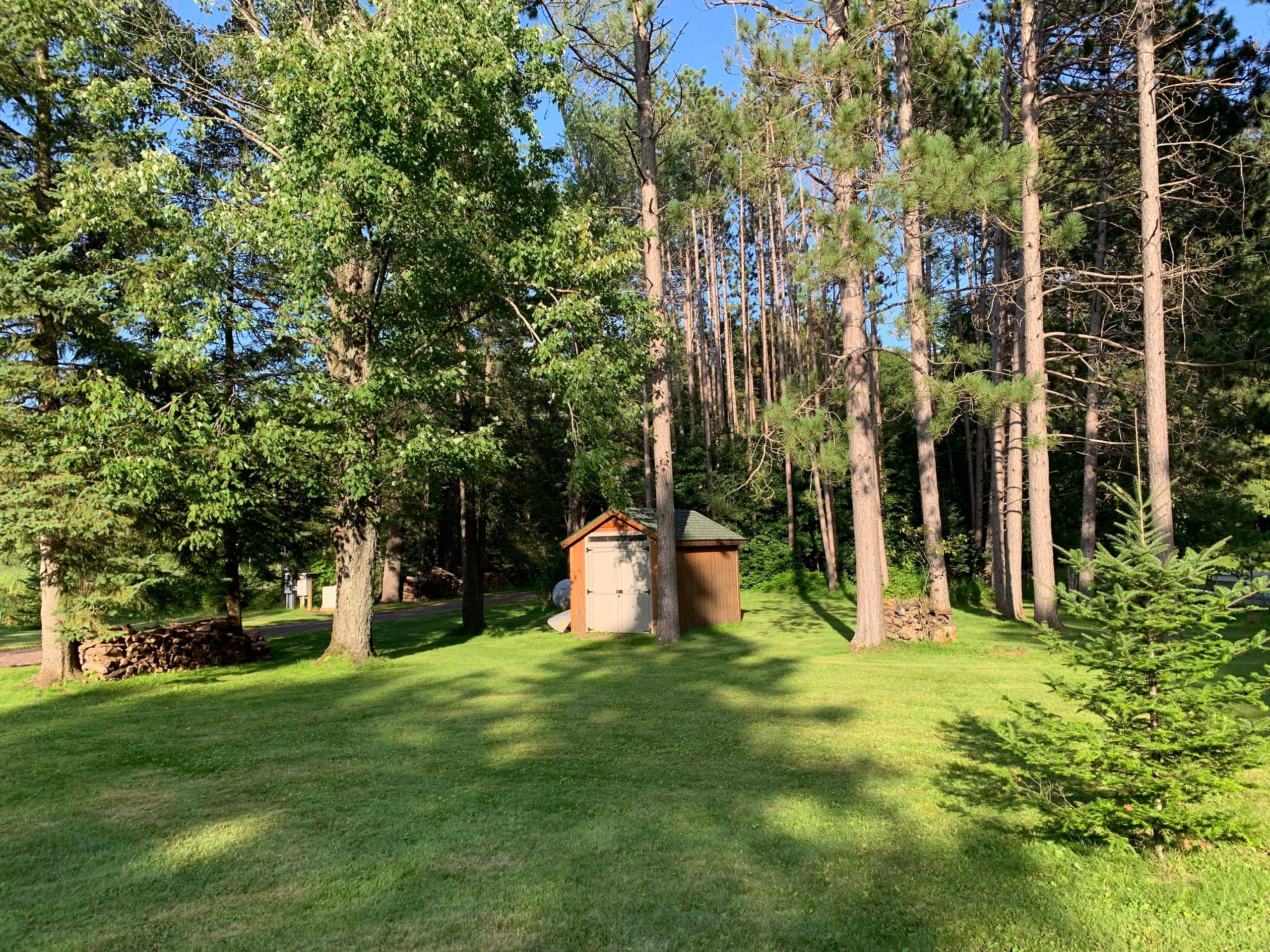 BEFORE- Instant Forest in Wisconsin
