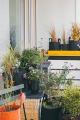 Que planter pour quel style sur un petit balcon en ville ?