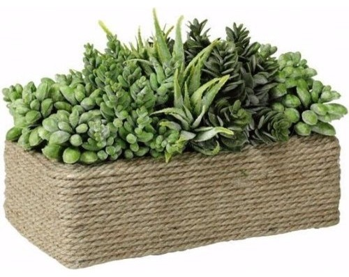 Succulents In Rectangular Wound Rope Pot traditional plants
