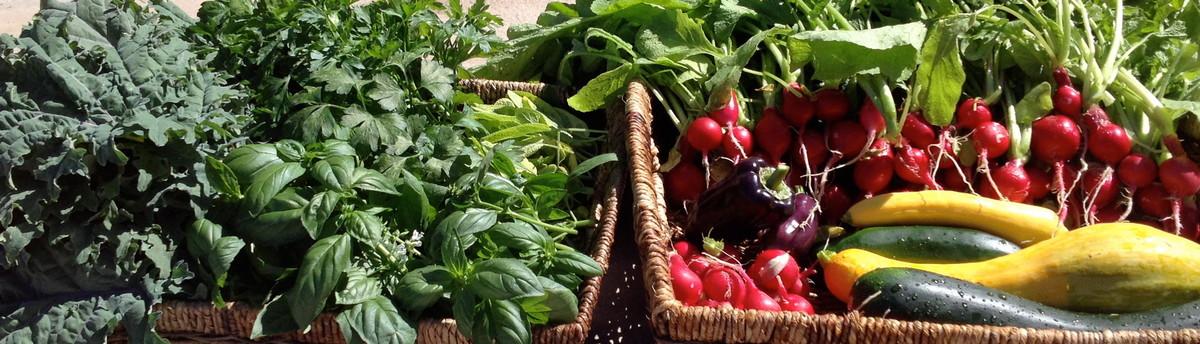 StartOrganic Vegetable Garden Service   San Jose, CA, US 95153