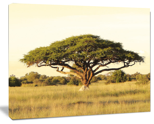 "Acacia Tree On African Plain, Oversized African Landscape Canvas Art, 40""x30""."