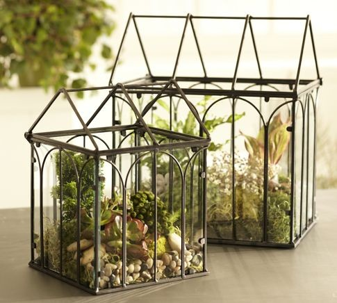 Wire Terrariums  indoor pots and planters