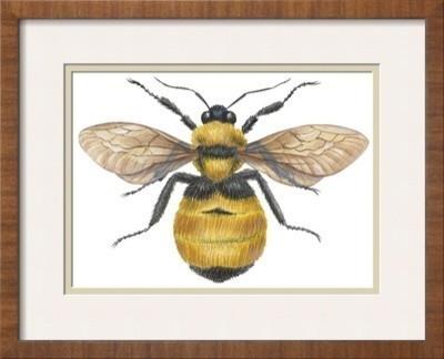 bumble bee framed art print contemporary fine art prints