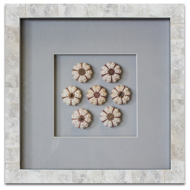 Pearls of the sea pearl in capiz shell frame sea urchins wall accents by wjc design - Wall decoration with pearls ...