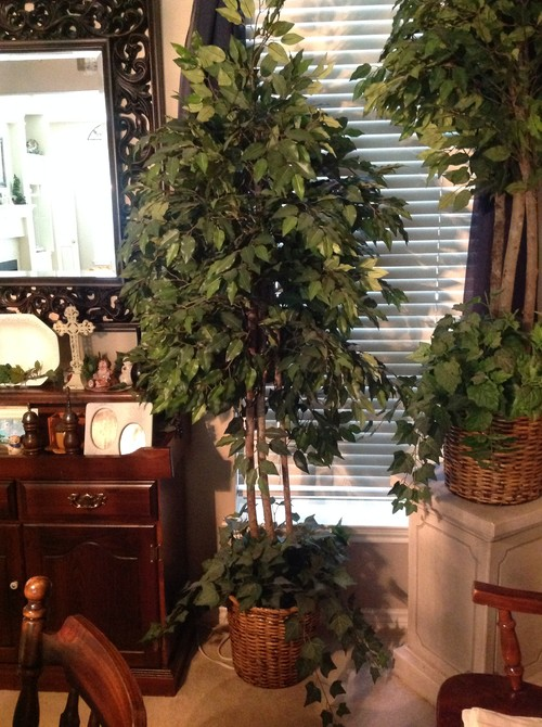 Artificial Ficus Trees Keep Or Discard
