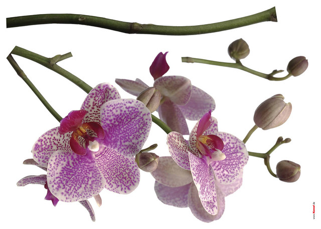 Orchids Wall Decals.