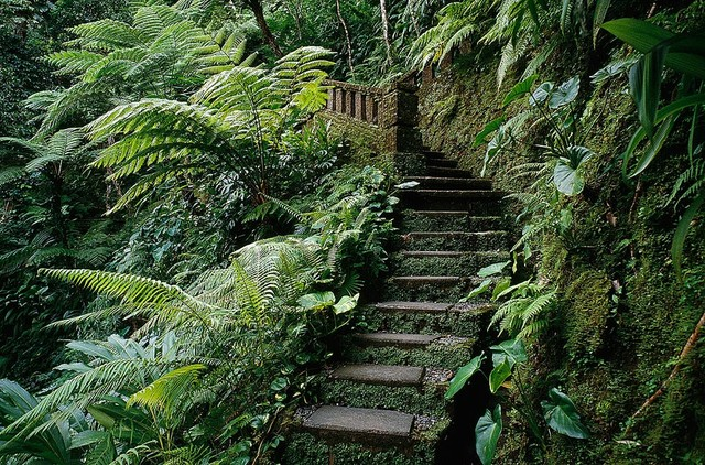 Stone Steps In Dense Jungle Wallpaper Wall Mural, Self Adhesive  Contemporary Wall  Part 25