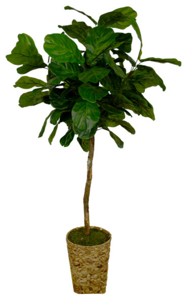 6.5' Majestic Fig in Round Seagrass Basket Container (3342)