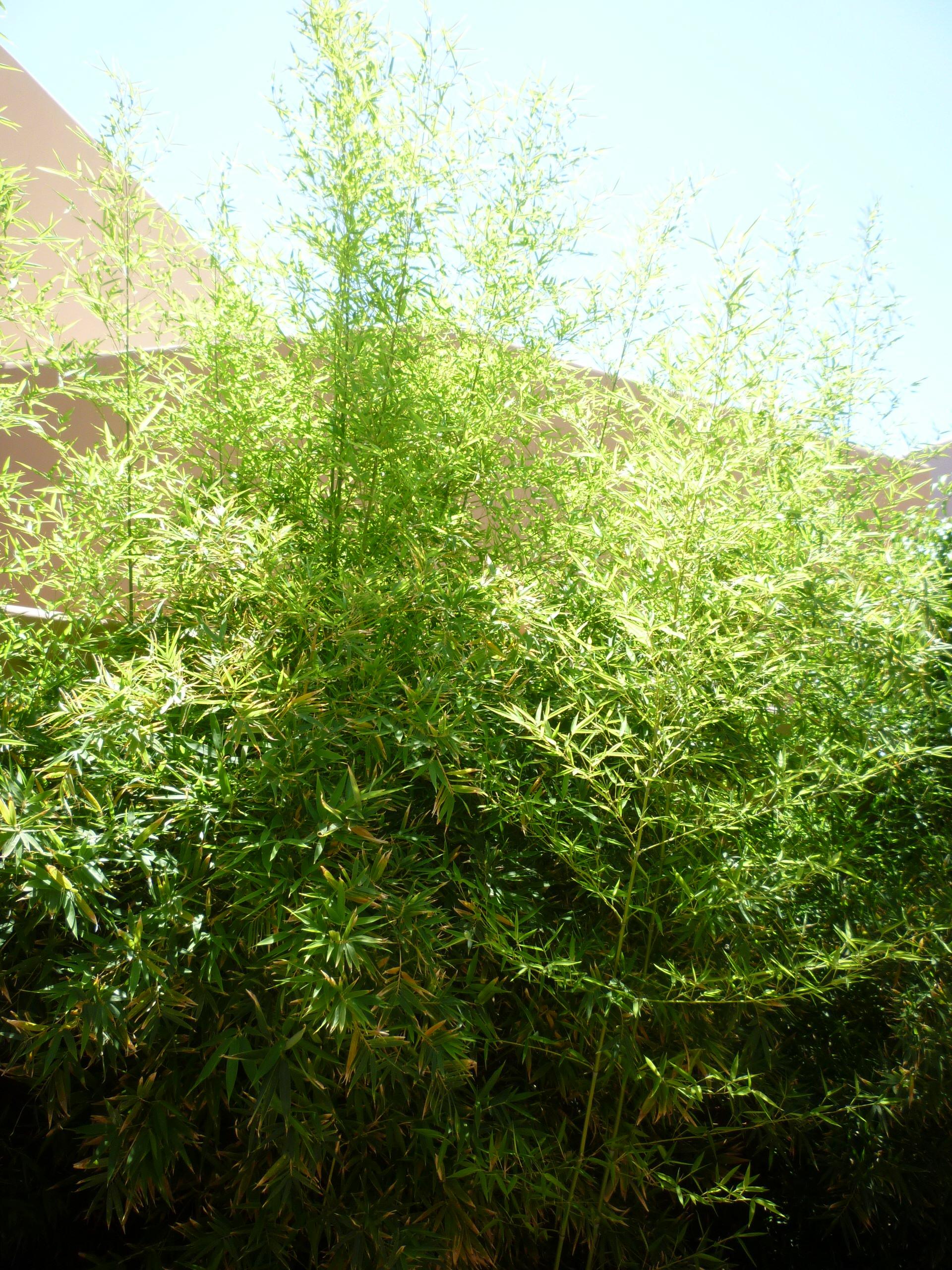 Bamboo Plantings - 2 Years