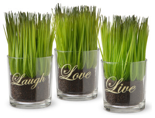 3-piece sprout-filled small glass cups - contemporary - artificial