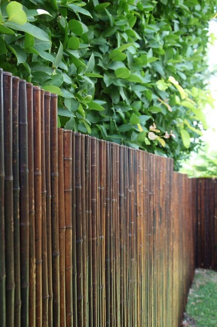 Bamboo fencing privacy screens tropical sydney by for Outdoor bamboo privacy screen