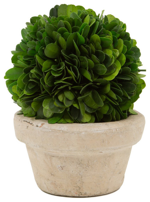 Boxwood Ball Topiary , 4in D X 5 1/2in H
