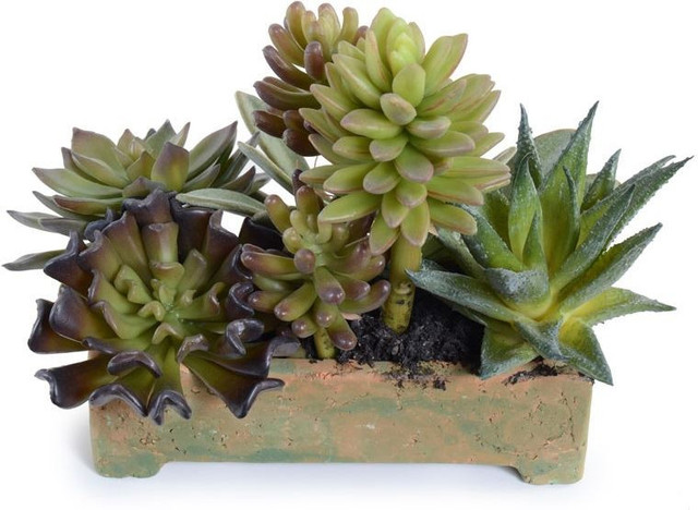 Small succulents long planter plants by inside stores for Plants that live long