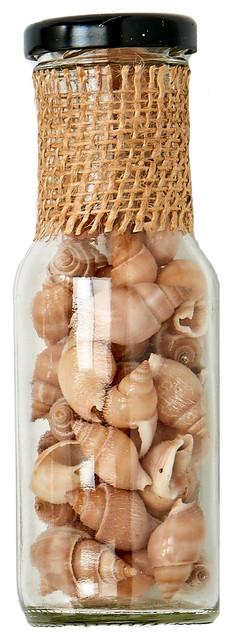 """Shells In 6"""" Glass Bottle"""