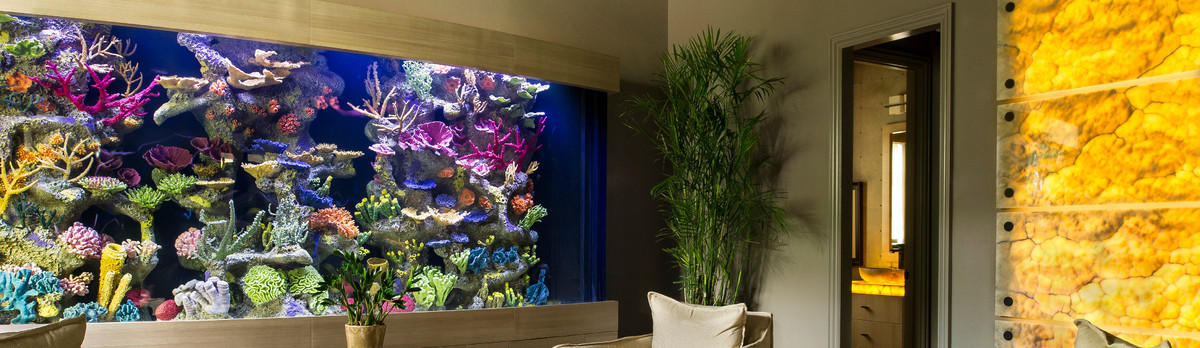 living color aquariums ft lauderdale fl us 33309. Black Bedroom Furniture Sets. Home Design Ideas