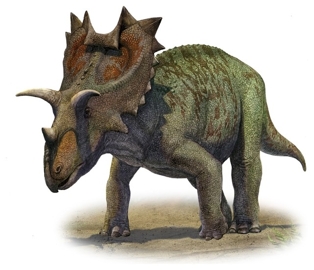 Ceratops Montanus A Prehistoric Era Dinosaur, Print - Contemporary - Prints  And Posters - By Posterazzi