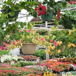 Callaways Yard Garden Centers Ridgeland MS US 39157