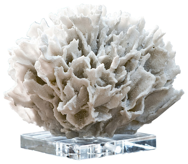 Ribbon Coral On Crystal Base White Beach Style Decorative Objects And Figurines By Regina