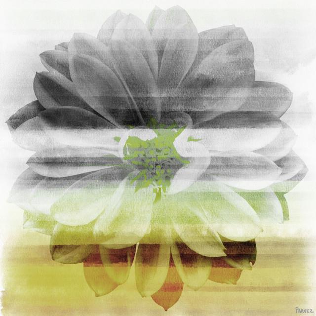 """bloom"" Fine Art Canvas Print, 18""x18""."