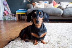 How to Choose the Right Pet for a Small Home