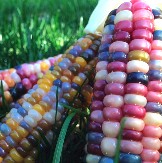 Open Up A World Of Color And Flavor With These 10 Edible Plants