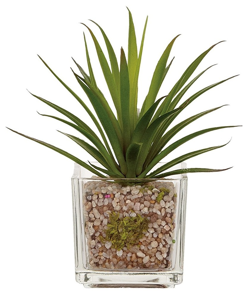 Torre and Tagus Glass Potted Echeveria, Grass ...