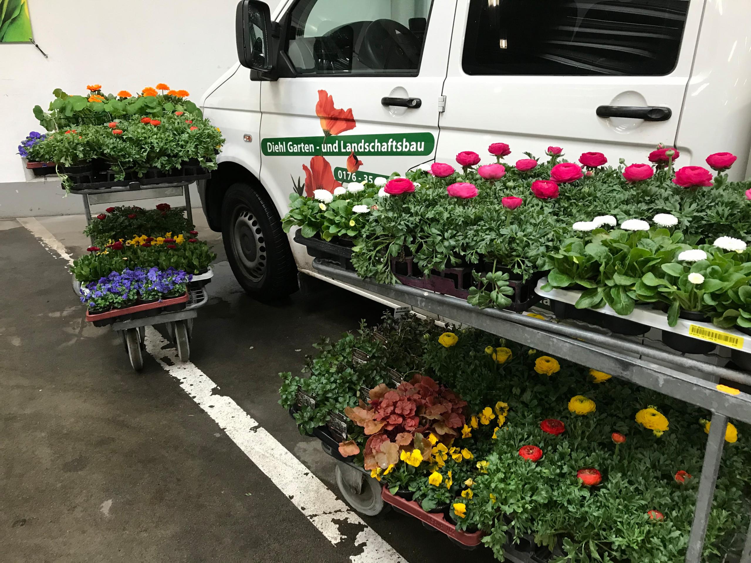 Saison Bepflanzung