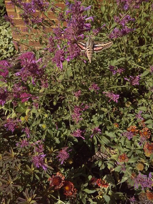 A little visitor in the garden - The garden web forum ...