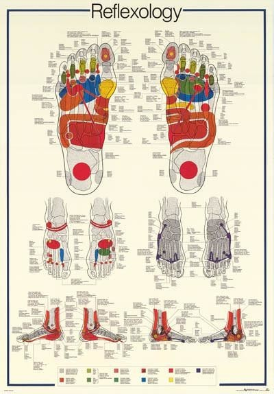 Reflexology Foot Massage Anatomy Poster 27x39 Contemporary